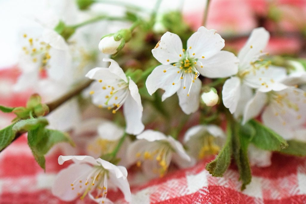 Schwarzwälder Erdbeer-Überraschung